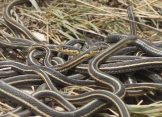 orgía de las serpientes